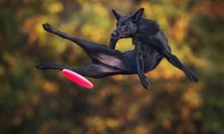 Esses Lindos Cães Conseguem Voar!