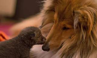 O Cão e a Raposa - Amigos Para Sempre!