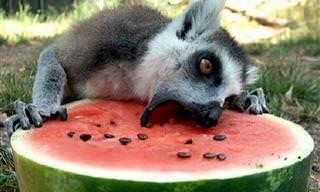 18 Animais Que Realmente Adoram Comer