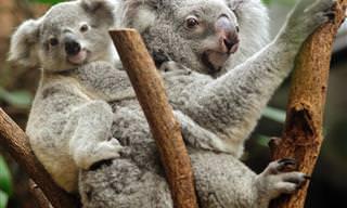 Momentos Ternos da Natureza: Mamães e Filhotes!