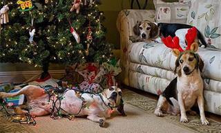 Cães e Gatos Que Bagunçaram o Natal!
