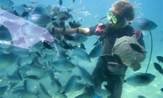10 Ótimos Lugares Para Mergulhar