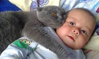 Gatos viram felinos ferozes para proteger bebês humanos!
