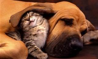 Lindos Animais Inusitados Dormindo Juntinhos!