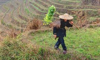 Piada: O presidente e o fazendeiro chinês