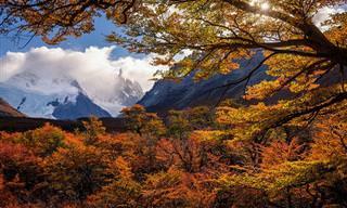 Cores encantadoras do outono na Patagônia