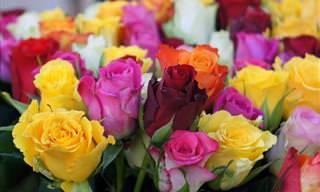 Conheça a linguagem secreta das flores na Era Vitoriana
