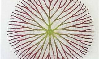 A natureza inspira belos e delicados bordados