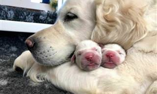 20 momentos inestimáveis de mamães caninas