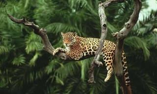 Conhecendo a Bela Amazônia Por Dentro