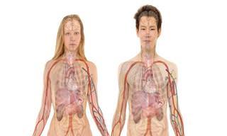 Teste: Você Conhece o Corpo Humano?