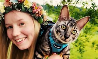 Nipa, uma gatinha talentosa e adorável