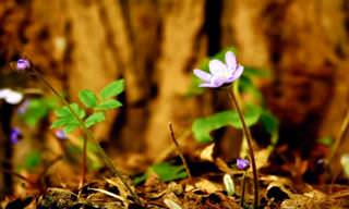 Deixe-se Encantar Pelo Concerto do Desabrochar Das Flores...