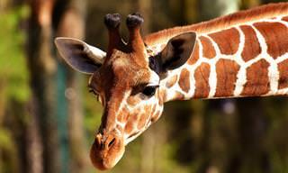 Teste Interativo: Você é Um Bom Conhecedor do Reino Animal?