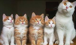 Confira as Famílias de Gatinhos Mais Fofas do Planeta!