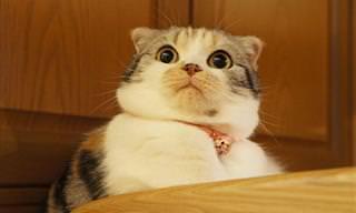 16 Expressões Divertidas de Gatos Dramáticos