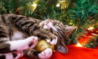 Gatos Que Sabem Fazer a Festa no Natal!