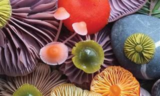 O maravilhoso mundo colorido dos cogumelos