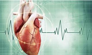 25 Fatos Surpreendentes Sobre o Coração Humano