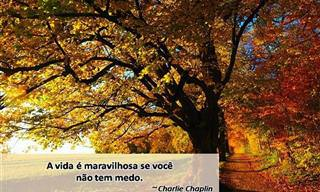 Frases Inspiradoras Que Vão Embelezar o Seu Outono...