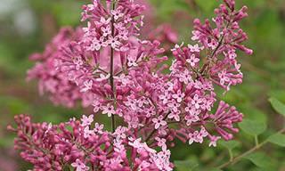 7 Flores Maravilhosas Para o Seu Jardim