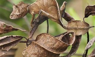 20 Espécies Animais Campeãs da Camuflagem