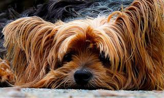 14 Ótimas Dicas Para Donos de Cães!