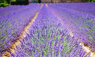 8 Plantas Que Ajudam a Reduzir o Estresse