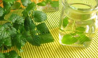 Conheça as vantagens de consumir erva-cidreira!