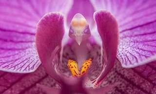 17 Flores para Lá de Exóticas