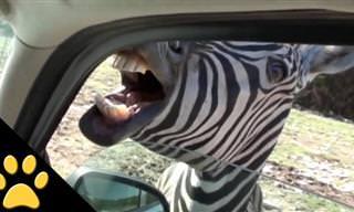 Esses são os animais selvagens mais divertidos da internet!