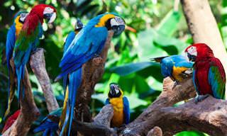 Encante-se Com a Beleza Única da Floresta Amazônica