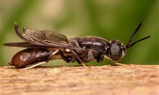 Está cansado de moscas na sua casa? Aprenda a eliminá-las!