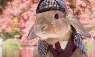 Um coelhinho impecavelmente vestido com elegância