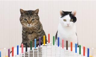 Gatos e Dominós Parecem Combinar Muito Bem!