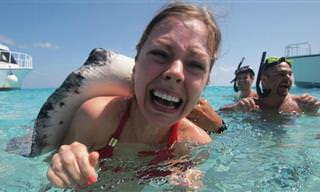 10 Criaturas marinhas mais perigosas do mundo