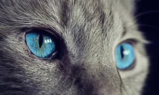 Tente Adivinhar o Animal Através do Olho