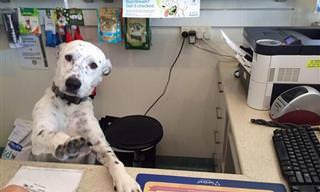 E Se os Cachorros Tivessem Trabalhos de Humanos?