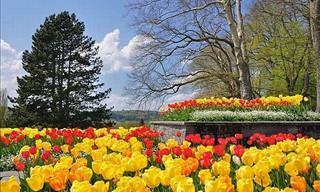 Bem-Vindo a Mainau, a Maravilhosa Ilha das Flores no Sul da Alemanha