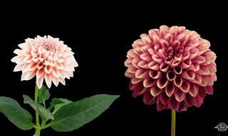 Flores que desabrocham e tornam o seu dia bonito
