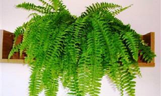 Plantas Que Podem Diminuir a Umidade na Casa