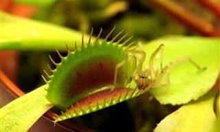 Conheça e Assista Incríveis Plantas Carnívoras em Ação