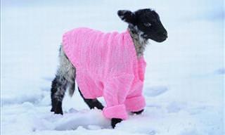 O Inverno Mais Adorável de Todos...