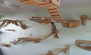O Paraíso dos Gatos