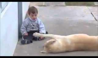 Belo Momento Entre um Bebê e um Cão