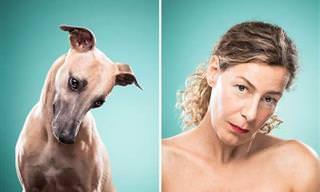 Expressões Caninas em Rostos Humanos
