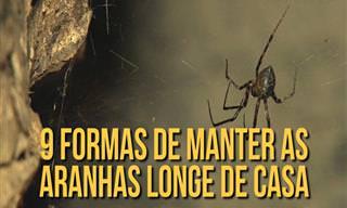 9 Ótimas Dicas Para Espantar Aranhas Sem Produtos Químicos