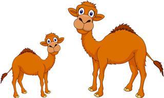 Piada Divertida: O Filhote de Camelo Muito Curioso