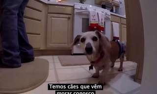 Um Lar Para Cães Idosos