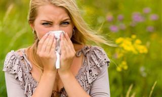 Você Tem Alergia a Pólen? Veja o Que Fazer